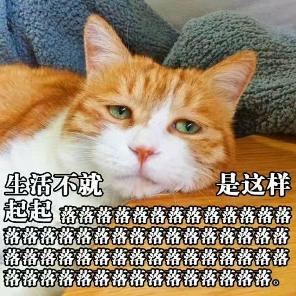小猫猫的可爱铃声下载