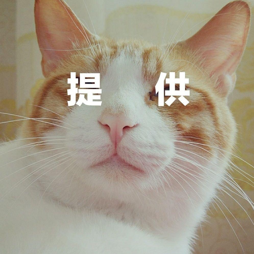 壁纸 动物 猫 猫咪 小猫 桌面 995_995
