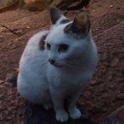 想加菲猫一样幸福