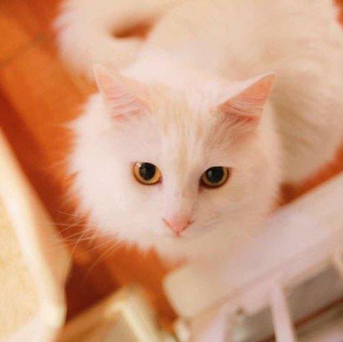 可爱猫咪开心图片