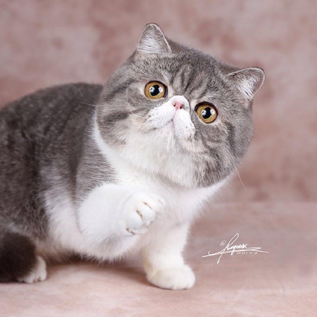 可爱萌猫猫桌面壁纸