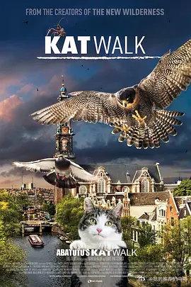 阿姆斯特丹猫未眠