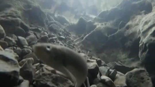 自然解码·守洞待鱼的奥秘