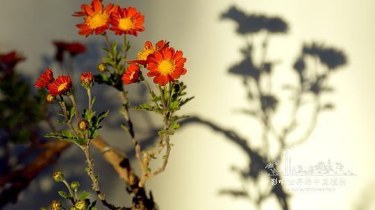 影响世界的中国植物剧照