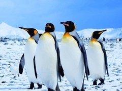 """被游客挤爆的南极 太""""南""""了"""