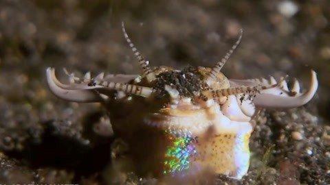 巨型怪虫长达3米 潜伏沙地可瞬间撕碎猎物