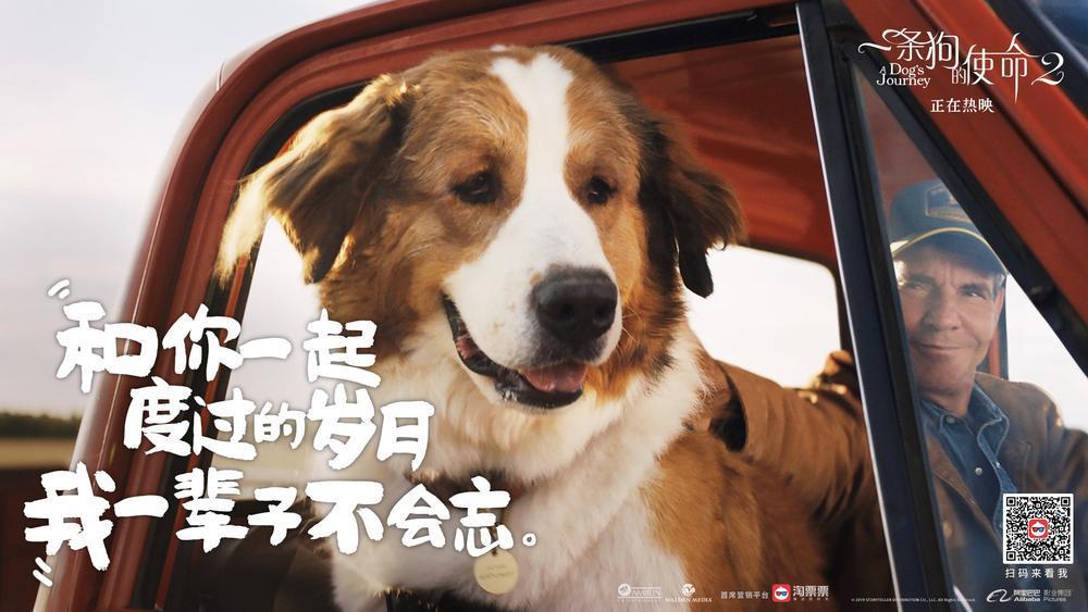 一条狗的使命2剧照
