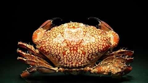 一只螃蟹毒死一家人 如果捞到千万不要吃
