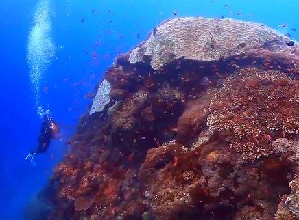珊瑚守护者