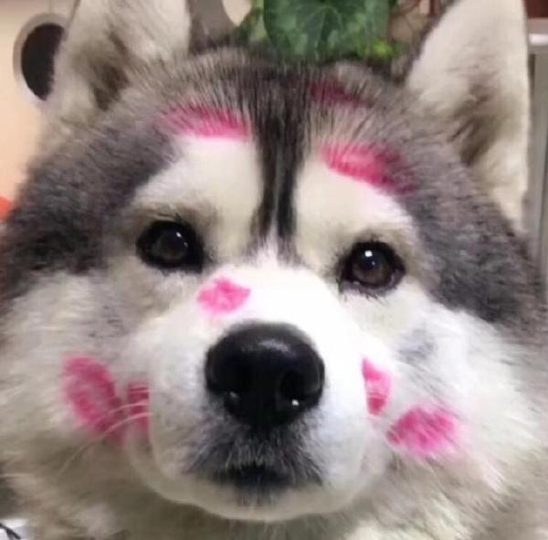 抖音十大网红狗狗排名 抖音最火的狗狗排行榜