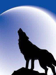 七黄五狼黑