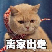 茜总的猫微博照片