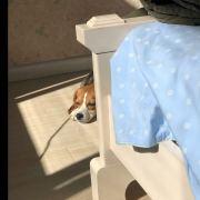 Bec_0327,发布寻狗启示热爱宠物狗狗,希望流浪狗回家的狗主人。