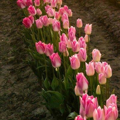 享受生活的真纯美善花好馨香!
