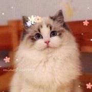 MINOS布偶猫舍