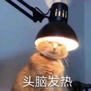 扬州风物微博照片