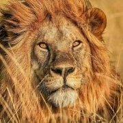 非洲的青山TANAPA微博照片