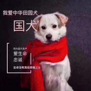 北京张宁流浪动物救助小院