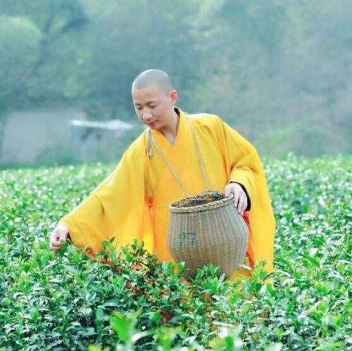 图虫资深佛教摄影师,米拍、视觉中国签约摄影师。