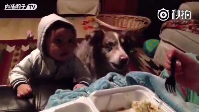我去,狗子急的会叫妈妈了
