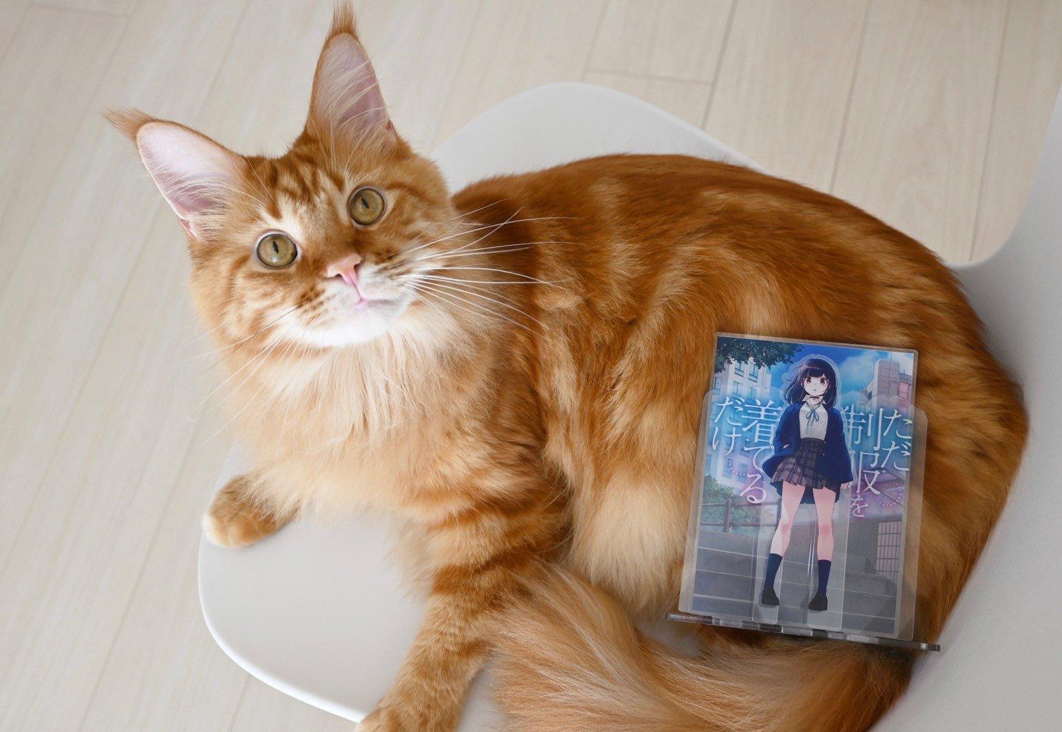真有此猫! 日本插画家40原《将喵星人萝莉化》猫娘就是它的化身!-itotii
