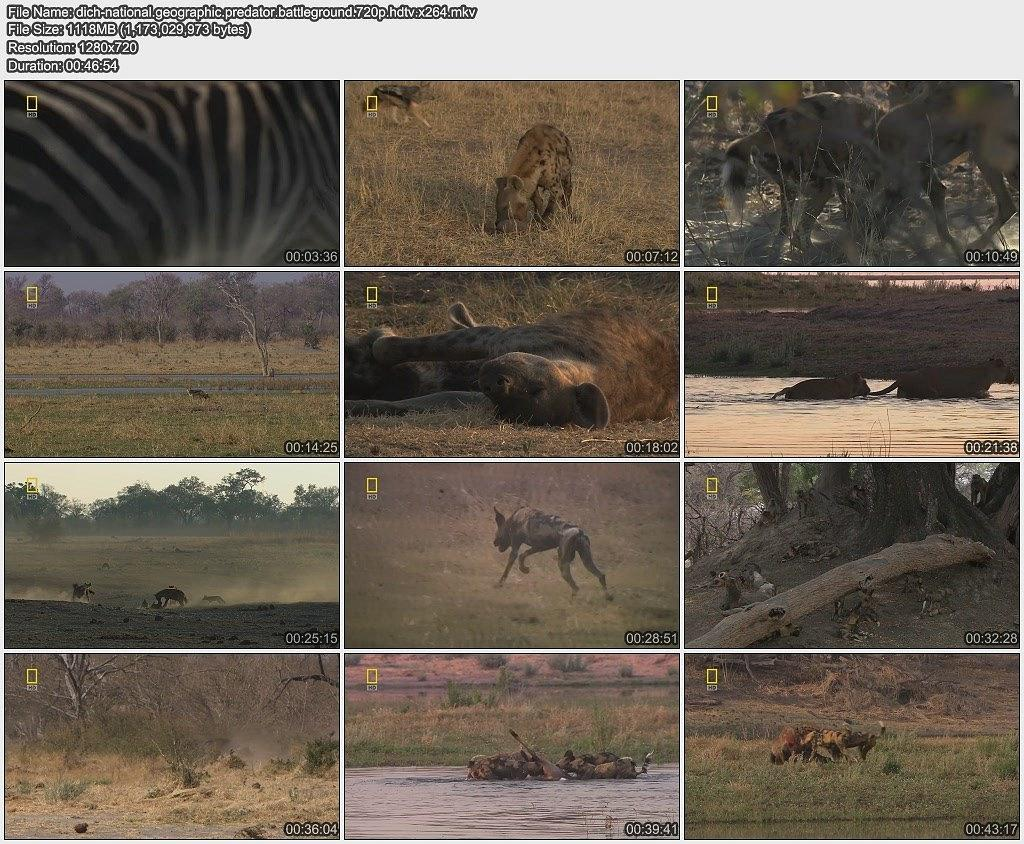 国家地理:掠食动物战场