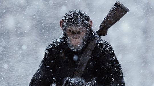猩球崛起3:终极之战图片