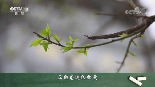 《百家讲坛》 20200319 爱上语文 12 语文学习的三重境界