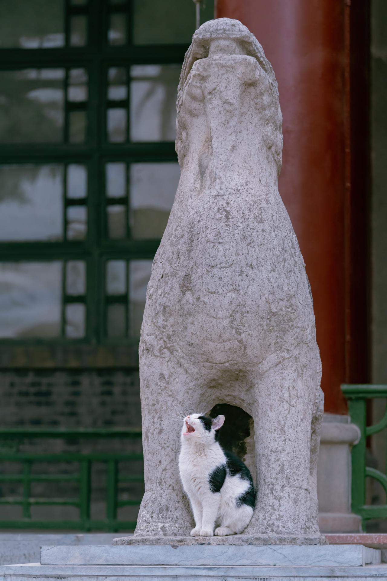 西安碑林猫