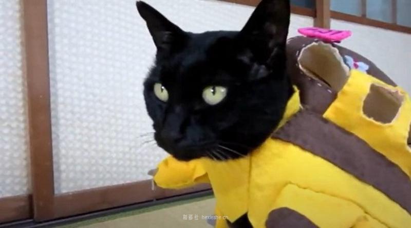 日本黑猫动画角色COS_和邪社13