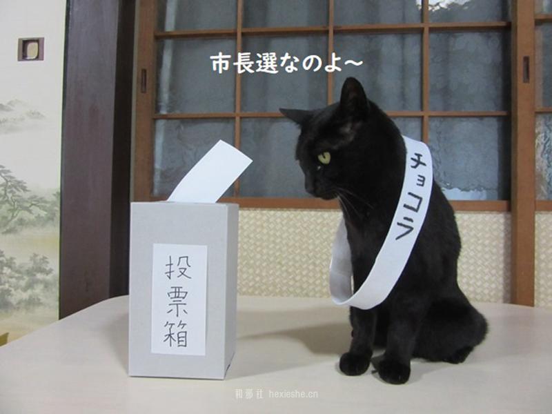 日本黑猫动画角色COS_和邪社16