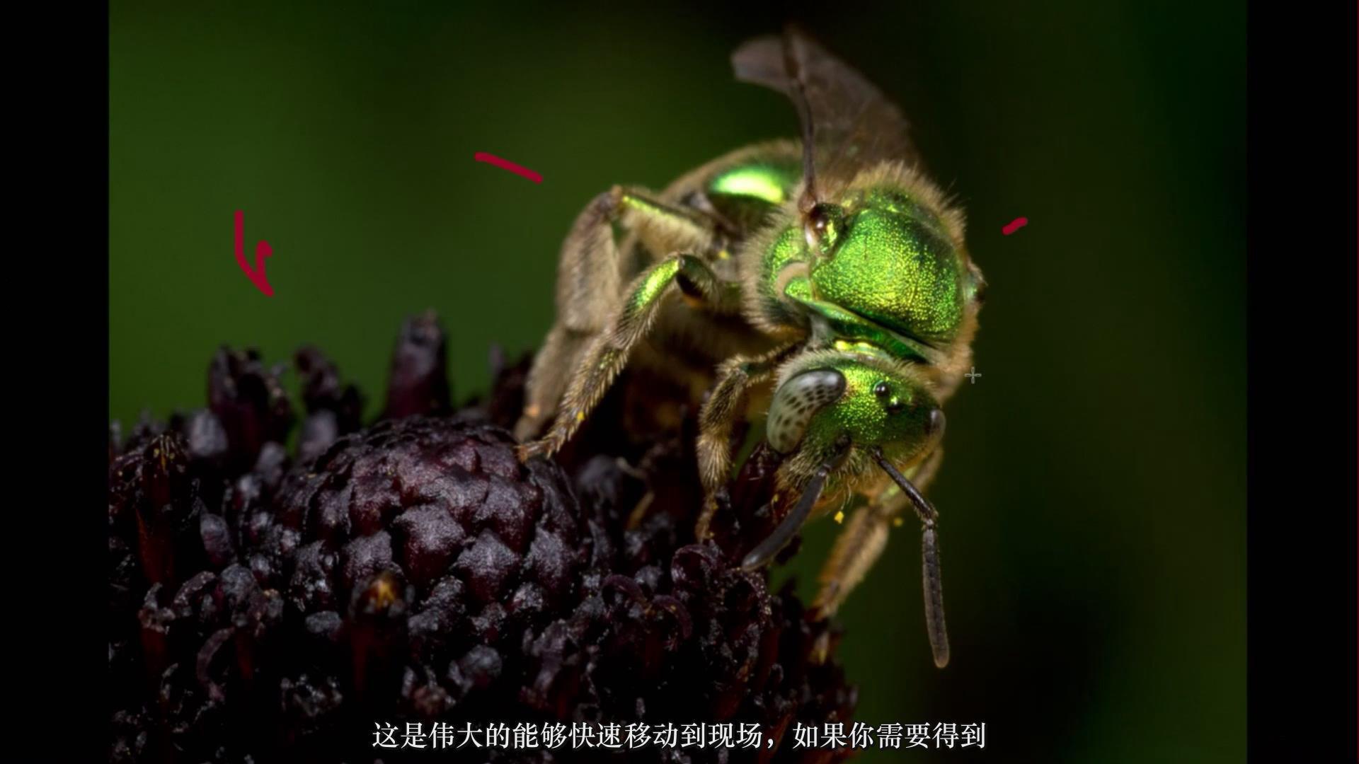 摄影教程_Craftsy –宏观摄影:精通昆虫微距摄影完整指南教程-中文字幕 摄影教程 _预览图8