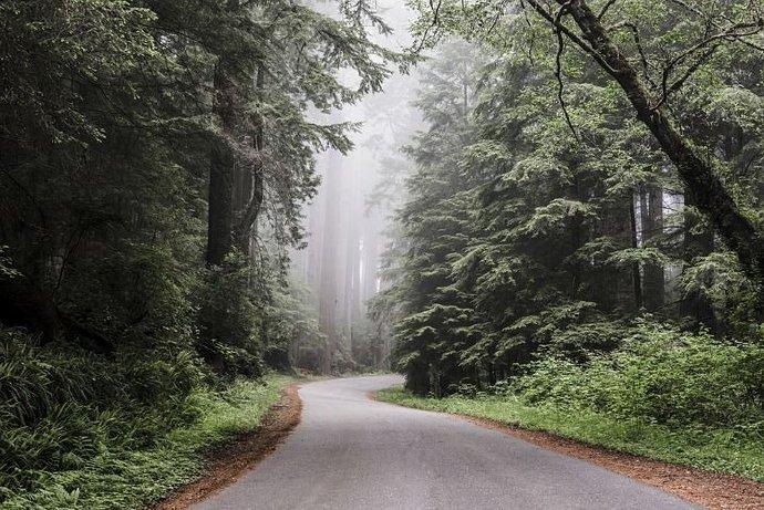 redwood-national-park-6667452__480
