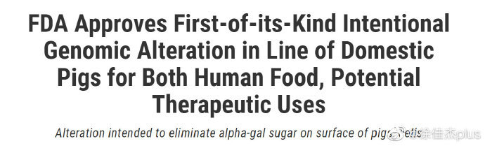 转基因猪上市了,一款既能够食用,又能够作为治疗使用的猪肉