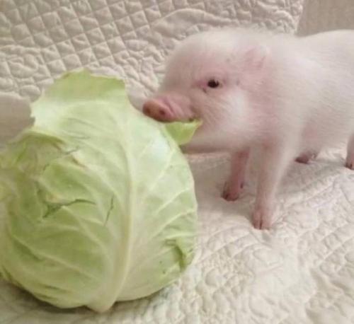 """高考过后,请放下""""拱白菜""""的心思"""
